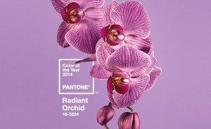 pantone-color-of-the-year-2014-radiant-orchid